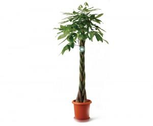 観葉植物 B
